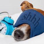 口呼吸を改善して睡眠の質を高めましょう!